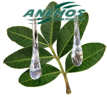 mastic leaves and mastic drops